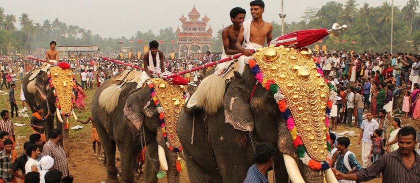 Mahouts on elephants at Thrissur Pooram Elephant Festival