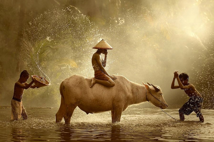 Boys with water buffalo in river