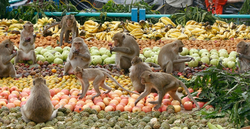 Monkeys feasting at the Lopburi Monkey Banquet Festival, Thailand