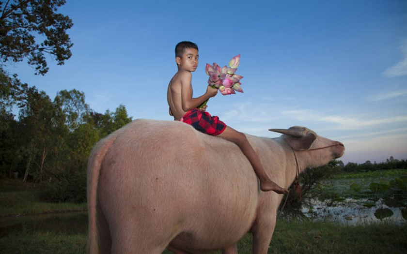 Buffalo Boy with Flowers