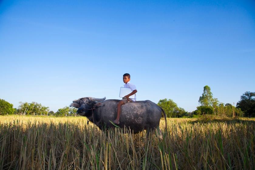 Buffalo Boy with Laptop